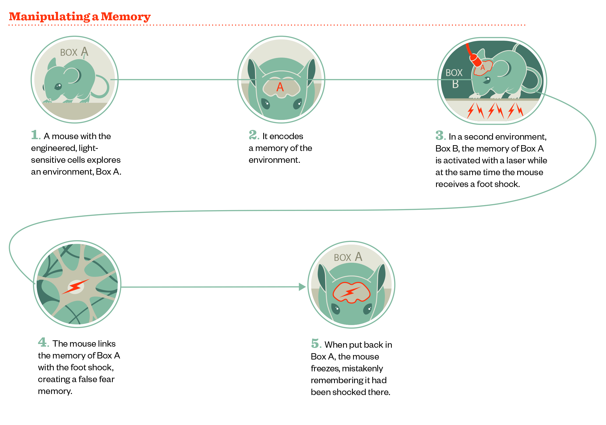 creating false memories Memory distortion and false memory creation in practices that are risky if not dangerous in terms of their potential for creating false beliefs and memories.