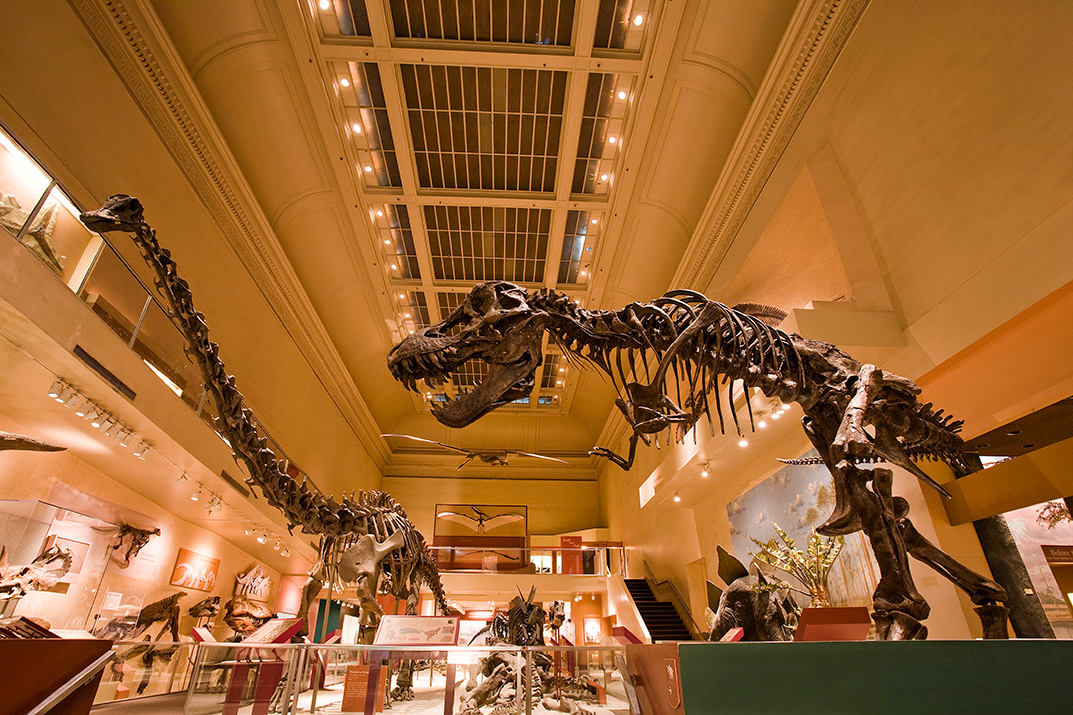 When T. Rex Meets Triceratops in the New Dino Hall, It ...