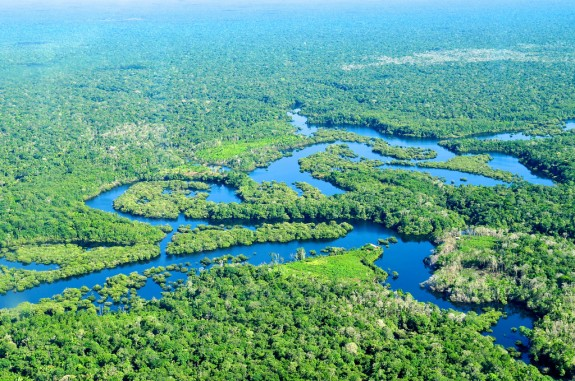 The amazon rainforest should deal with climate change better than we contrary to previous research tropical rainforests should be able to stand up to climate change freerunsca Choice Image