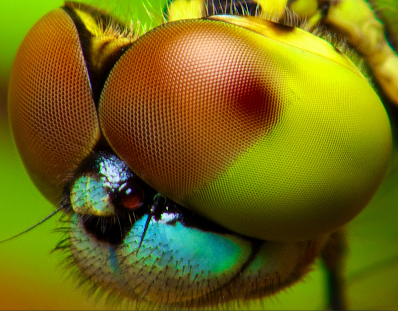 This Camera Looks At The World Through An Insects Eyes Smart - Each of these macro bug photographs is made from thousands of individual images