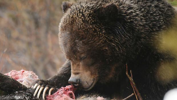 It's a Bear-Eat-Bear...