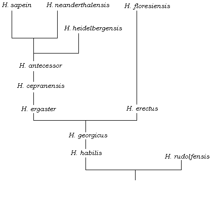 Homo Sapiens' Family Tree May Be Less Complicated Than We ...