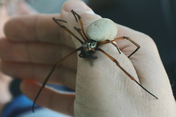 12_03_2012_giant-spider1-e1354557948629.