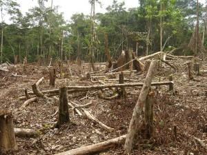 Amazon rainforest deforestation, courtesy of Flickr user Threat_to_Democracy