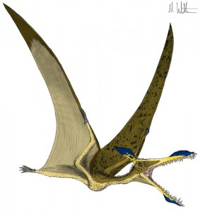 One of Mark Wittons Pterosaurs, Courtesy of the artists Flickr page