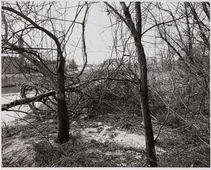 Untitled, from the series The Pond. John Gossage. Courtesy of the American Art Museum.