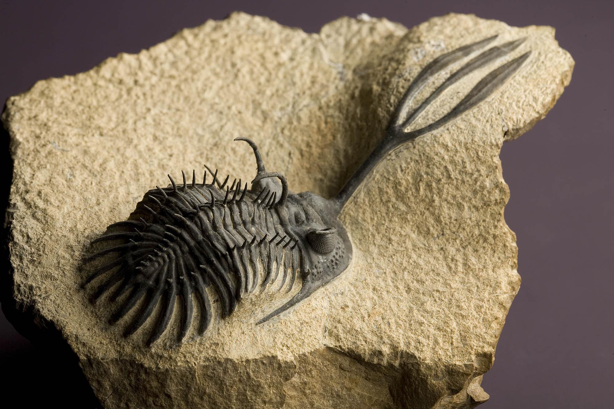2007-7438-trilobites.jpg