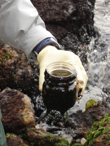 A sample from an oil spill is taken from Alcatraz Island (Credit: NPS/Craig Glassner )