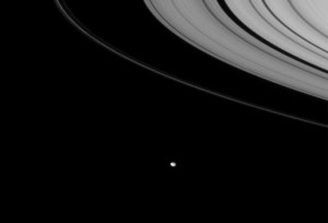 The tiny moon Janus resides on the outer edge of Saturn's rings (Credit: NASA/JPL/Space Science Institute)