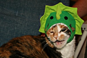 A cat in a dinosaur costume, courtesy of Flickr user windy234