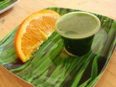 A shot of wheatgrass. Courtesy of Flickr user Number1MrazFan