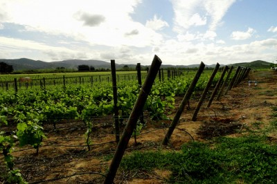Trinidad Vineyards in Chile, courtesy of Flickr user Dear Garou