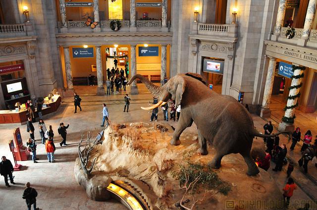 Natural History Museum Orari