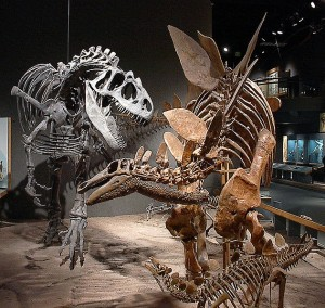 "Allosaurus and Stegosaurus are just two of the dinosaurs that could appear on ""Terra Nova."" Image from Wikipedia."