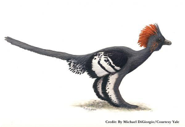 A restoration of what Anchironis probably looked like in life. Illustration by Michael DiGiorgio (Courtesy Yale).