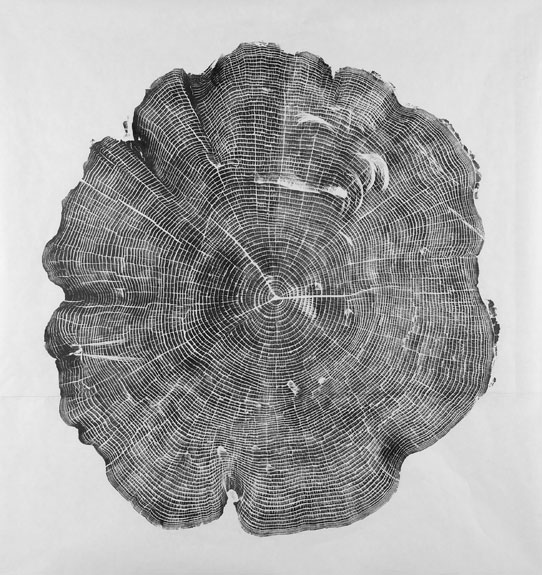 Covered in Ink, Cross-sections of Trees Make Gorgeous ...