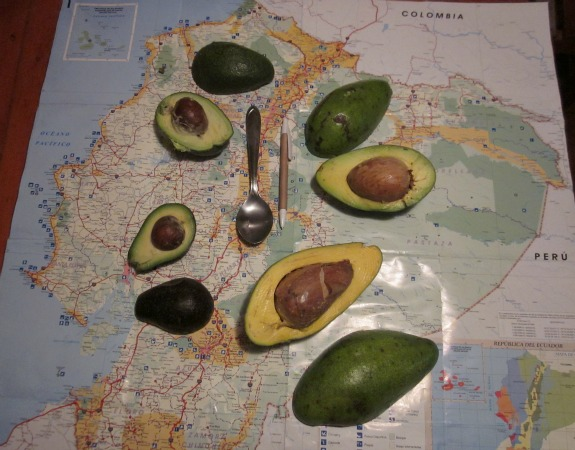 What Makes These Avocados Different From All Others? | Travel