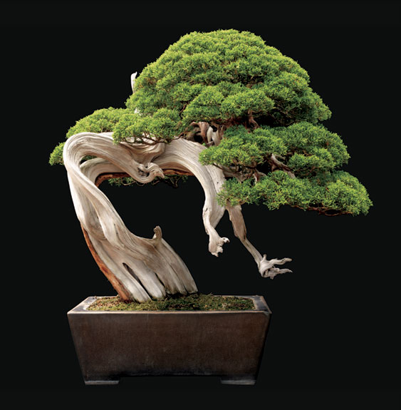 Picture Perfect Bonsai Science Smithsonian Magazine