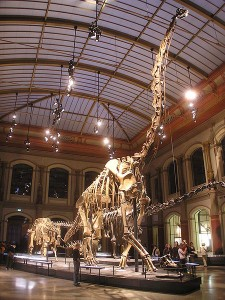 The skeleton of Brachiosaurus on display in Berlin. From Wikipedia.