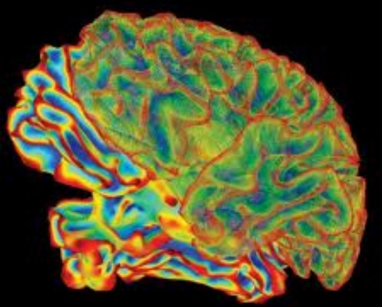 brains research neuroscience