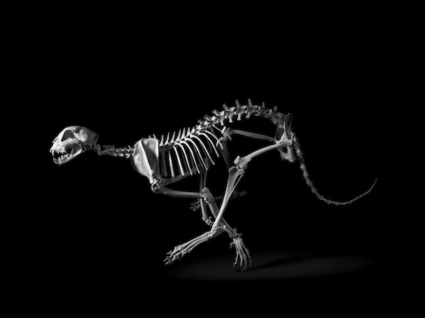how to make a vertebrate skeleton