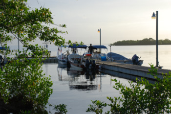 The dock at STRI's Bocas del Toro research station. Photo by Megan Gambino.