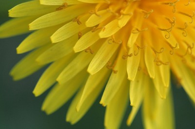 Courtesy Flickr user code poet