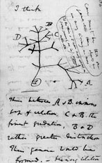 "A hypothetical ""Tree of Life"" drawn by Charles Darwin in his notebooks. Image from Wikipedia."