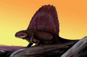 A restoration of Dimetrodon. From Wikipedia.