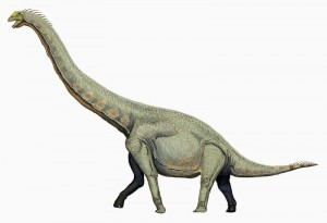 A restoration of the sauropod Euhelopus. From Wikipedia.