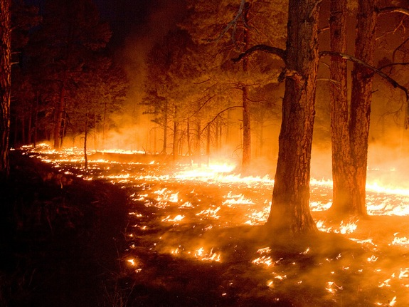 New Mexico's 2012 Gila Wildfire