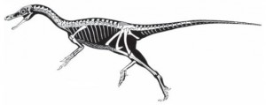 A restoration of the nearly-complete skeleton of Haplocheirus. Missing parts of the skeleton are in grey. From the Science paper.