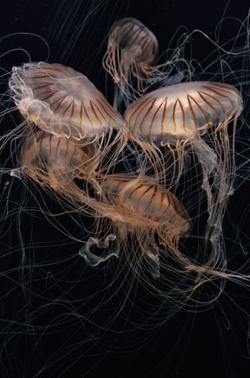 14 Fun Facts About Jellyfish | Science | Smithsonian