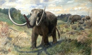 Mastodons and other fossilized creatures challenged the idea that God's Earth was unchanging (via wikimedia commons)