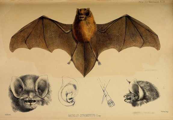 Scientific Illustrations Your Go To Guides For Halloween Costumes