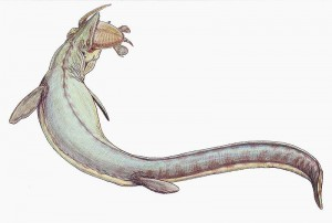 A restoration of Mosasaurus. From Wikipedia.