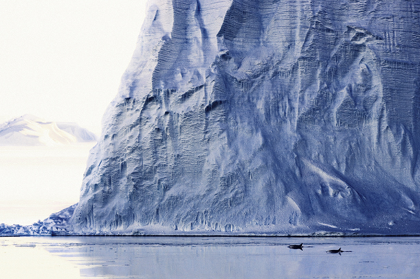 Two orcas are dwarfed by an Antarctic iceberg.