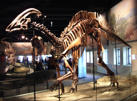 Actual Skin Color The Actual Color of Dinosaur