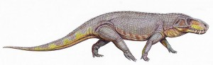 A restoration of Prestosuchus. From Wikipedia.