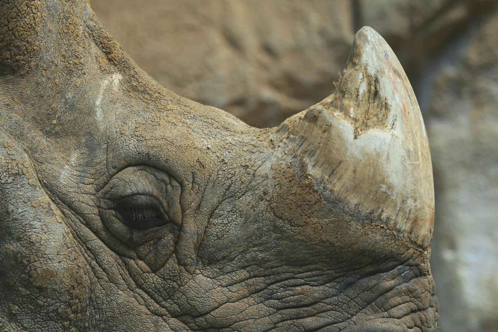 Wildlife trade argumentative essay