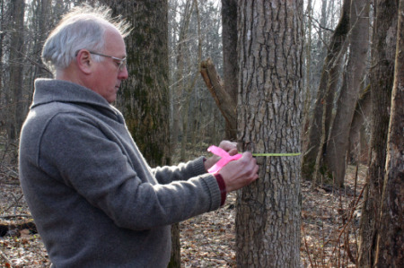 Parker, his colleagues and a team of citizen scientists have tagged more than 20,000 trees at the Smithsonian Environmental Research Center. Photo courtesy of SERC.