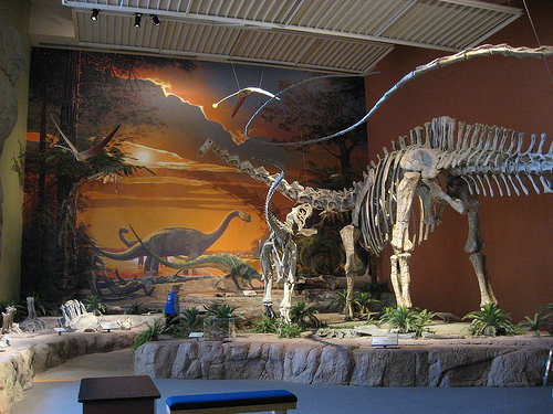 An immense Diplodocus hallorum (formerly Seismosaurus) is attacked by the theropod Saurophaganax in this diorama from the New Mexico Museum of Natural History and Science. From Flickr user gwarcita.