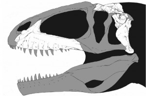 A restoration of the skull of Shaochilong by paleoartist Brett Booth. The areas in white represent known parts of the skull. From the Zootaxa paper.