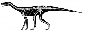 A restoration of Asilisaurus. Darker areas are missing portions of the skeleton. From the Nature paper.