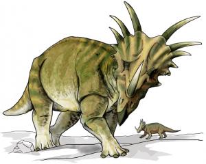 A restoration of Styracosaurus. From Wikipedia.