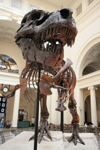 "The skeleton of ""Sue"" the Tyrannosaurus at Chicago's Field Museum. From Wikipedia."