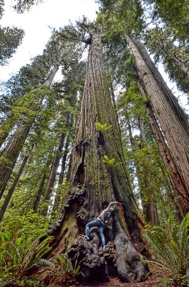 The Tallest Strongest And Most Iconic Trees In The World