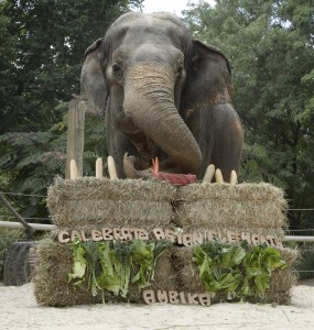 Ambika celebrates her 60th birthday at the Celebrate Asian Elephants event last year.