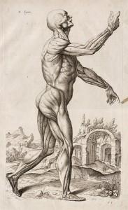 """Courtesy of the National Gallery of Art. Roger de Piles, 1635–1709 """"Abregé d'anatomie, accommodé aux arts de peinture et de sculpture,"""" Paris, 1668. Engraving and letterpress David K. E. Bruce Fund."""