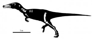 The Austroraptor, as reported in the Journal